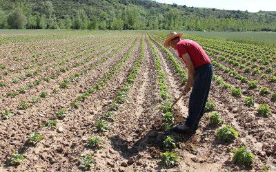 La Junta de Extremadura trabaja para aumentar la producción y comercialización ecológica